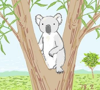 snsコアラと木の上.jpg